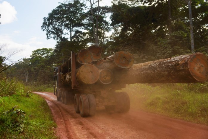 Illegaal gekapt hout uit Afrika onderschept in Antwerpse haven