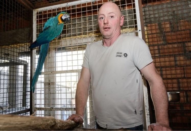 In beslag genomen papegaaien uit Ekeren aangekomen in Panama