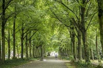 Vijf Antwerpse groene oases pakken prestigieuze Britse prijs