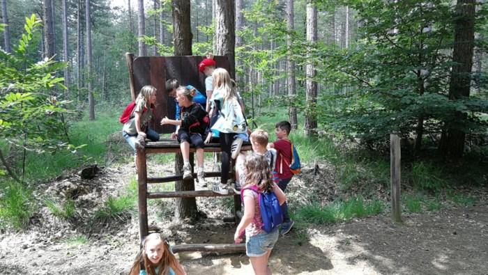 Dichte bos Hertberg krijgt meer open plekken