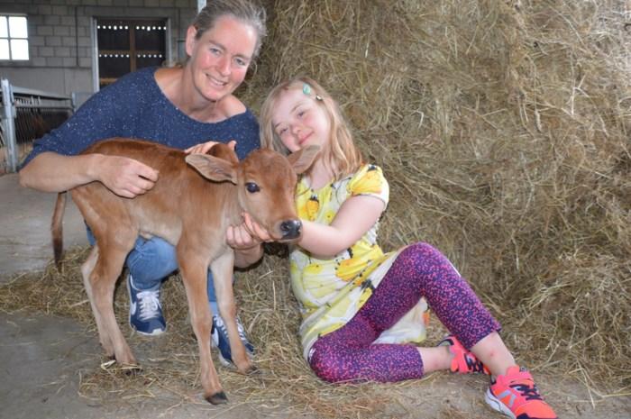 Minikoe krijgt ieniemieniekalfje in beleefboerderij