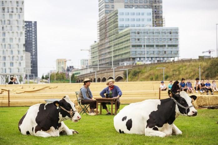 """'Weiland met koeien' verrast bezoekers Park Spoor Noord: """"Helemaal overdonderd"""""""