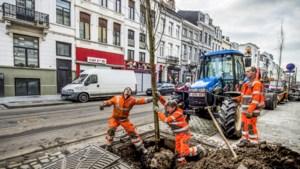 6 miljoen bomen nodig tegen de hitte volgens Bos+: hoeveel plant uw stad er?