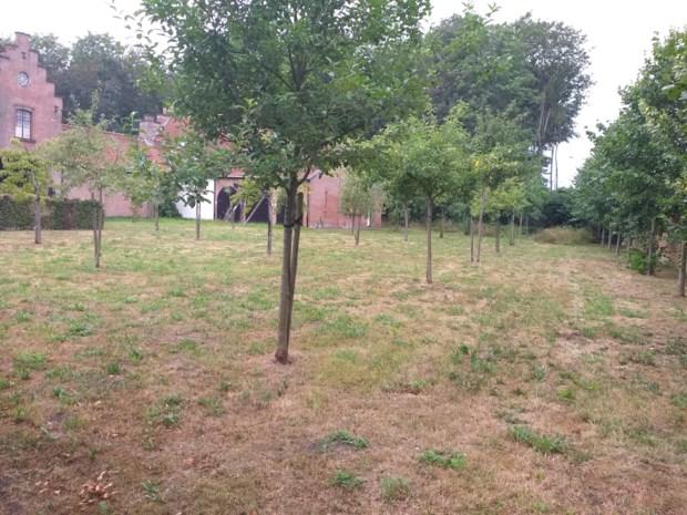 Gemeente gaat boomgaarden met fruit opwaarderen