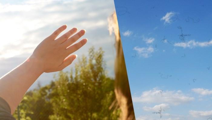 Waarom zien we 'draadjes' zweven op mooie dagen? En waar komen ze vandaan?