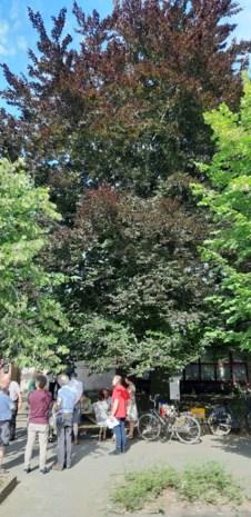 Vergunning om bomen aan Lepelhof te rooien tijdelijk ingetrokken