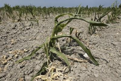 Ons land scoort alarmerend slecht in internationaal onderzoek naar waterschaarste