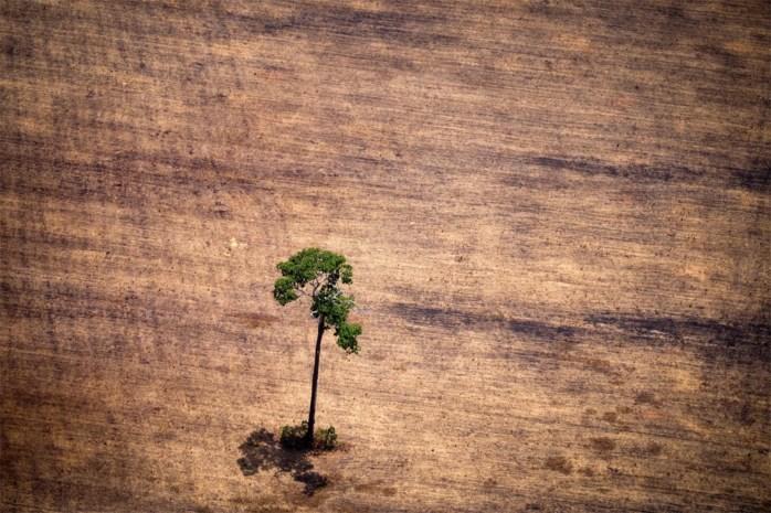 Amazonewoud gaat voor de bijl: ontbossing in Brazilië op een jaar tijd verviervoudigd