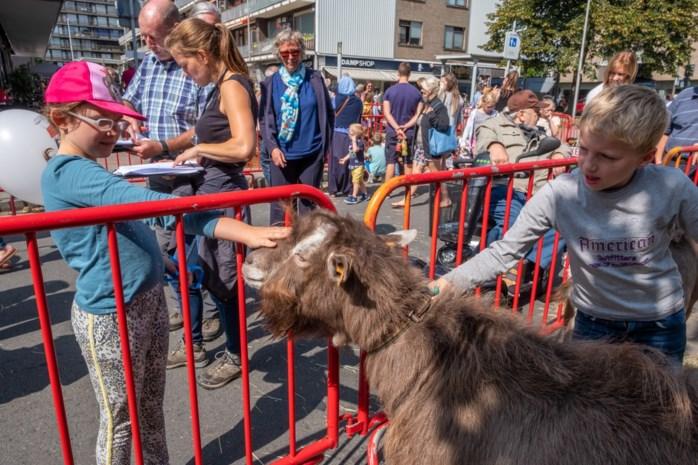 """Dierenarts streng voor beesten op veetentoonstelling: """"Een paard met een blokstaart moet terug in de wagen"""""""