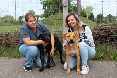"""Dierenvereniging houdt familiedag: """"Er zijn nog zo veel honden op zoek naar een gouden mandje"""""""