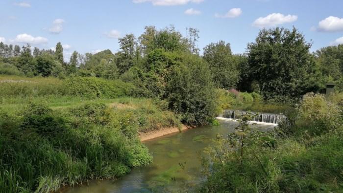 Vlaamse overheid start binnenkort hermeandering: vissen in Grote Nete krijgen er reeks bochten bij