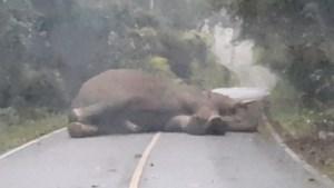 En plots wordt je rit verstoord door… een slapende olifant in het midden van de weg