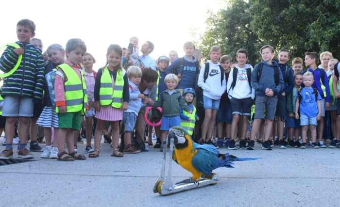 Steppende papegaai opent nieuw autovrij plein voor schoolpoort Sint-Lucia