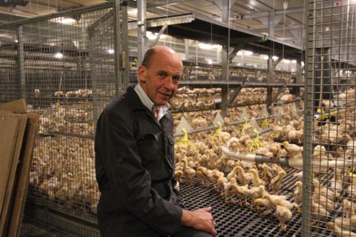 Dag van de Landbouw: de jumpende kippetjes van Frans