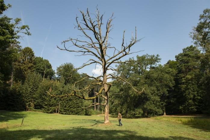 Bijna helft Europese boomsoorten met uitsterven bedreigd