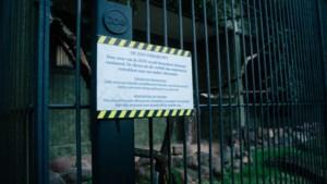 IN BEELD. Lege kooien, renovaties en verhuizen in de Antwerpse Zoo