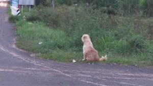 Hond wacht jarenlang op dezelfde plaats in de hoop dat zijn baasjes hem terugvinden