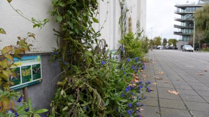 Burgerbegroting kiest voor groene straten en pleinen