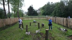 Gemeente legt hondenweide aan in Ebroek