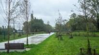 Aantal dode jonge bomen in een jaar verdubbeld: stad experimenteert met ondergrondse bufferzones