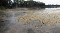 Verboden opgeheven na blauwalgenbloei in Antwerpse waterwegen