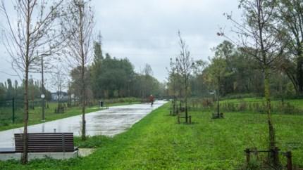 """Groen wil boomwaterzakken om sterfte jonge bomen in Deurne te bestrijden: """"Maar onze experts zijn geen fan"""""""