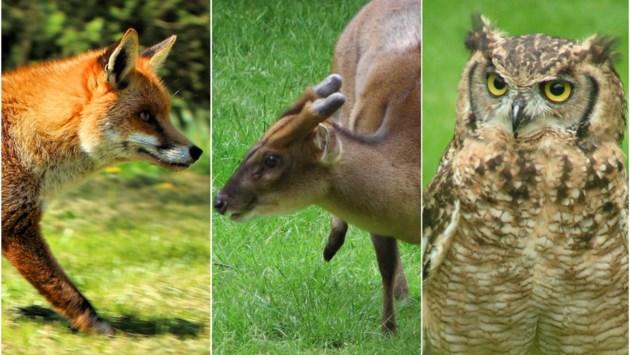 2.688 wilde dieren doodgereden in provincie Antwerpen dit jaar: van vossen tot oehoes