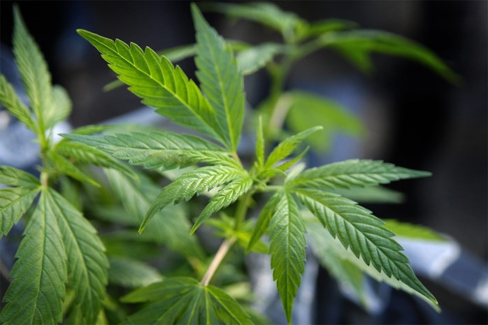 Bezoeker betrapt met drugs in gevangenis