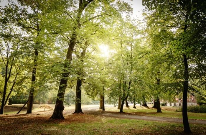 """Bomenkap moet gezondheid van bos garanderen: """"Het wordt zeker geen grote kaalslag"""""""