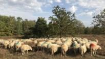 """Ernstig incident in Kesselse Heide: """"Honden moeten altijd aan de leiband"""""""