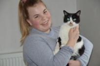 """Eigenares vergiftigde poes Cleo: """"Wees waakzaam voor kattenbeul die met koelvloeistof werkt"""""""