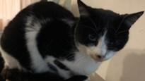 """Eigenares verbrande poes Cleo: """"Wees waakzaam voor kattenbeul die met koelvloeistof werkt"""""""