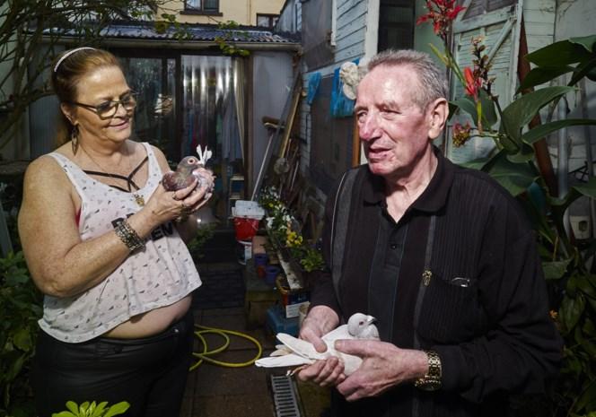"""Eén van de laatste duivenmelkers van 't Stad: """"Op verlof? Wie gaat dan dat duivenkot kuisen?"""""""