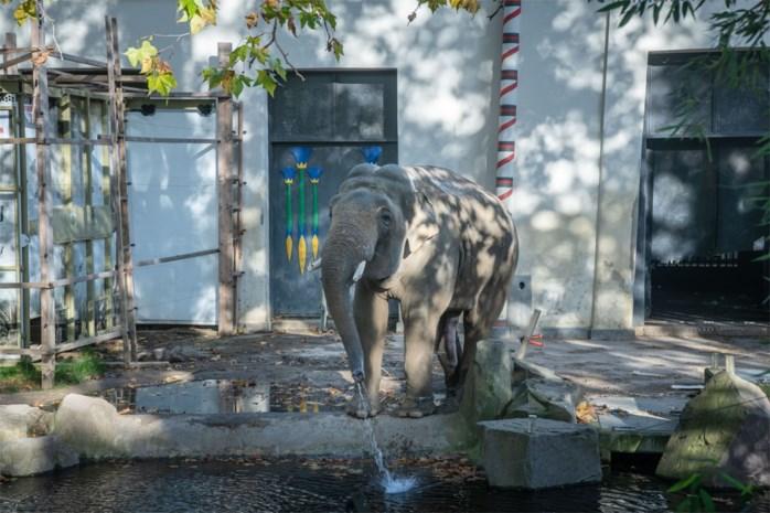 Antwerpse olifant Ming Jung zit in Engeland