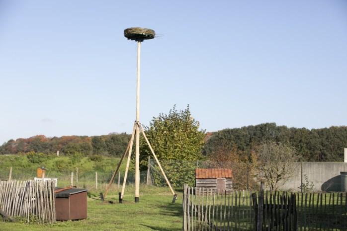 """Eigenaars B&B Hullebrug laten negen meter hoog nest installeren: """"We ontvangen nu ook ooievaars"""""""