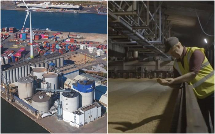 Antwerps bedrijf Boortmalt levert mout voor 100 miljard pintjes: grootste moutgroep ter wereld na overname