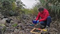 Antwerpse haven komt met vervolgplan in strijd tegen plastic korrels