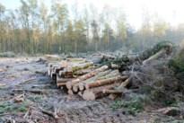 """Letterzetter zorgt voor kaalslag in bossen: """"We moeten de bomen kappen"""""""