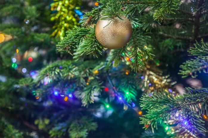 """OPROEP. Heb jij al een kerstboom staan thuis? """"Het maakt geluksgevoelens los"""""""