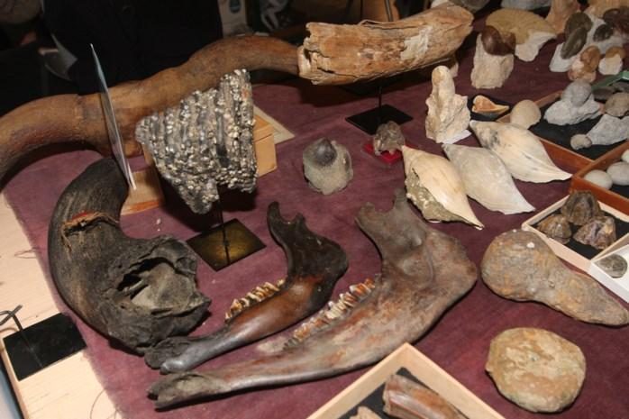 """Fossielenbeurs PaleoTime: """"Waar anders kun je een dinosaurusbeen vastnemen?"""""""