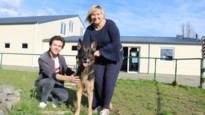 """Dierencentrum Waasland houdt ludieke verkiezing met Asielhond 2020: """"Koop geen hond voor kerst"""""""