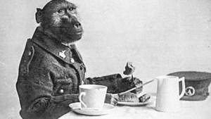 Apenstilstand: het verhaal van Jackie, de baviaan die als soldaat diende in WO I