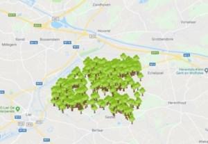 """Leuven én groot deel van Kempen kopieert Nijlens bomenproject: """"Blij dat we inspiratiebron kunnen zijn"""""""