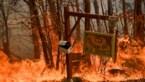 OPROEP. Australië in hoogste staat van paraatheid: zelfs binnenstad van Sydney bedreigd door bosbranden