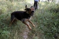 Celstraf geëist nadat hond uitbreekt en andere hond aanvalt