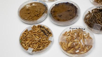 Kunnen insecten de wereld redden? Dat gaan ze onderzoeken bij KU Leuven in Geel
