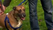 Eén van de drie honden van terminaal zieke Peter heeft een nieuwe thuis