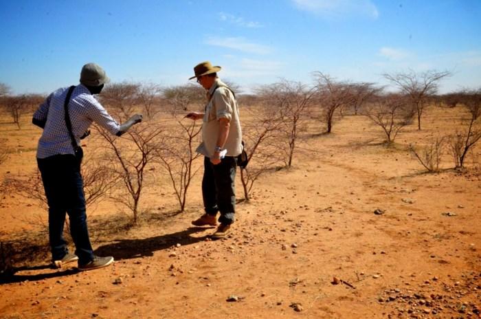 Origineel kerstcadeau: met Boechoutse vzw koopt u bomen voor de Sahara