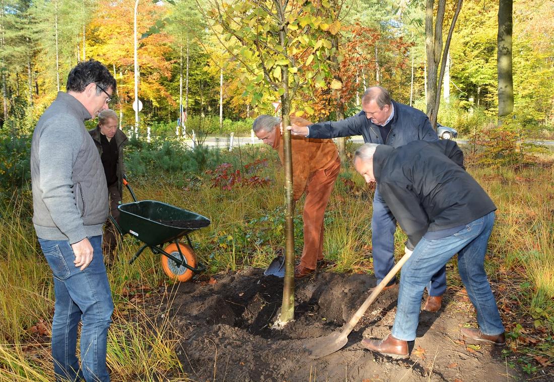 Kapellen plant nieuwe vredesboom (Kapellen) - Gazet van Antwerpen