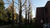 Dertien zieke monumentale bomen verdwijnen uit straatbeeld